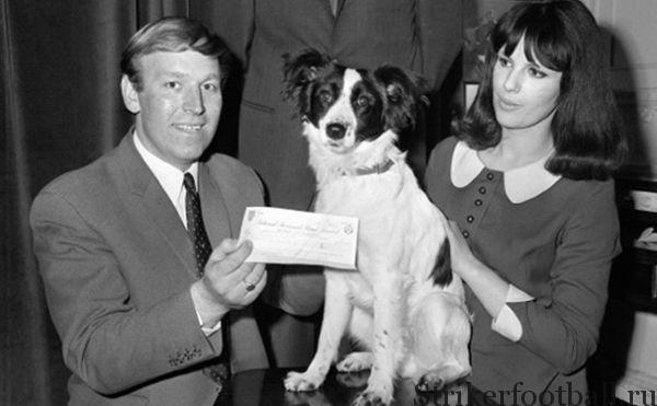 Пикклз, нашедшая украденный трофей под кустами неподалеку от частного дома, с серебряной медалью, которой ее наградила Национальная лига собаководство.